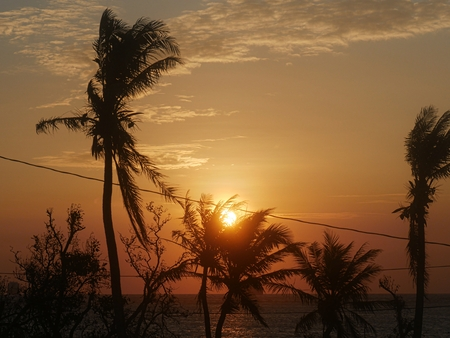 The sun sets over the tops of coconut trees by the beach, with an electrical line crossing the picture Archivio Fotografico