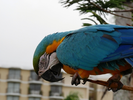 Side view of a colorful parrot holding on to a tree branch 스톡 콘텐츠