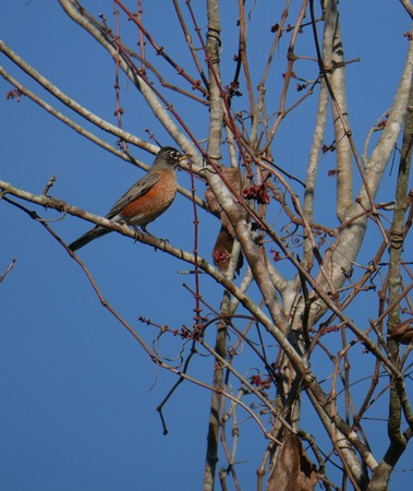 Beautiful bird perched on a branch of a leafless tree in winter
