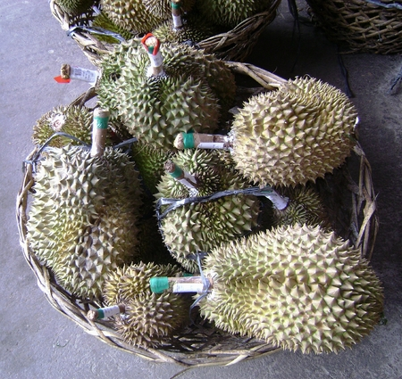 Freshly harvested durian piled in a big basket on the ground