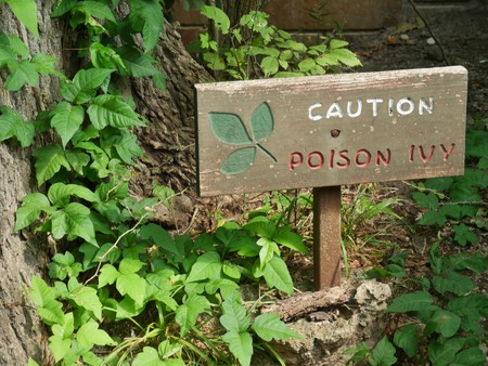 Wooden sign warning of poison ivy in a wooded area, 版權商用圖片