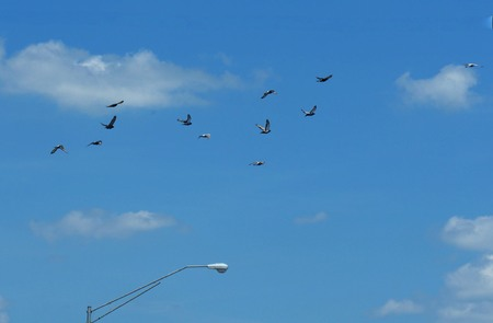 A flock of birds flying in the blue skies, with the top of a power post with light below