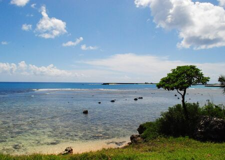 Scenic beach view with a young tree and green bushes