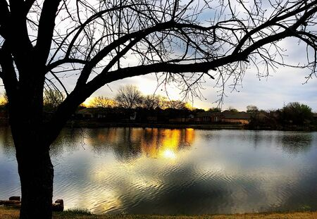 Silhouette of a tree with the sunset casting reflections in the lake Banco de Imagens