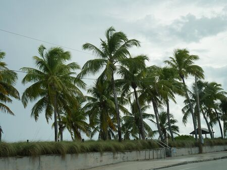 Coconut trees growing along S. Roosevelt Boulevard, Key West, Florida on a rainy afternoon.