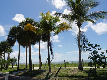 Coconut and palm trees lined up along the coast of S Roosevelt Boulevard, Key West, Florida on a beautiful day.