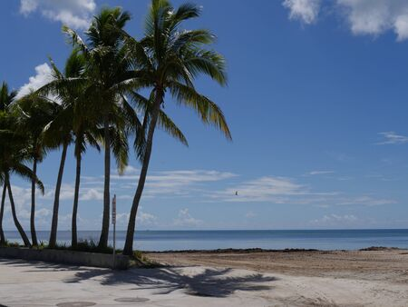 Beautiful beaches with coconut trees along S Roosevelt Boulevard, Key West, Florida.