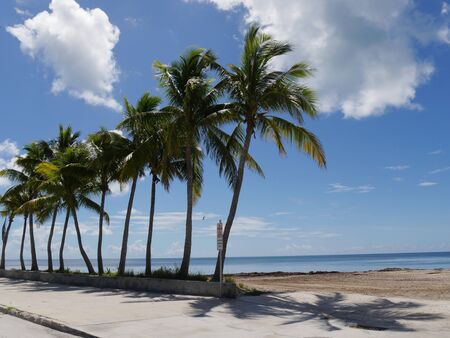 Wide stretch of beaches with coconut trees along S Roosevelt Boulevard, Key West, Florida.