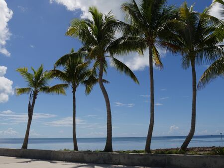 Coconut trees along the beach at S Roosevelt Boulevard, Key West, Florida.