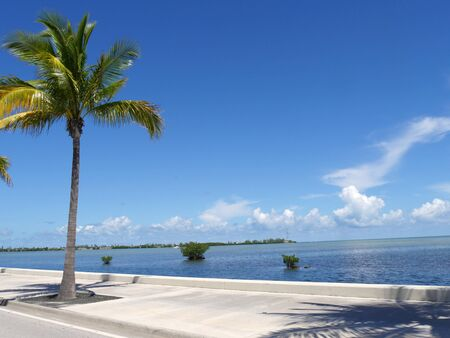Beautiful coastal view with a coconut tree along S. Roosevelt Boulevard in Key West, Florida.