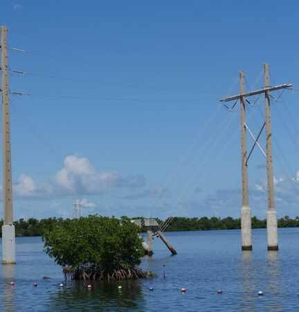 Shrubs growing in the water along a coastal area, with power poles