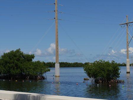 Power poles and shrubs in the water along a coastal area Фото со стока