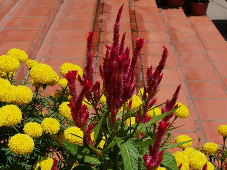 Colorful yellow marigold and red flowers adorn the red cement steps of a building