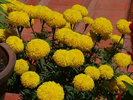Colorful yellow marigold flowers adorn the red cement steps of a building