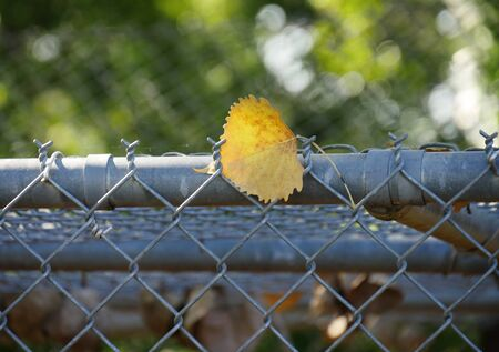 One fallen orange leaf on top of a cyclone wire, bokeh in the background