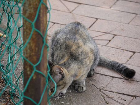 Cat eating food on the side street near a cyclone fence