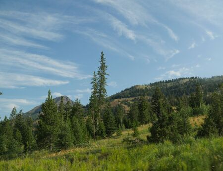 Lush greenery on sloping hills at the North Fork Highway heading to the east entrance of Yellowstone National Park. Stock Photo