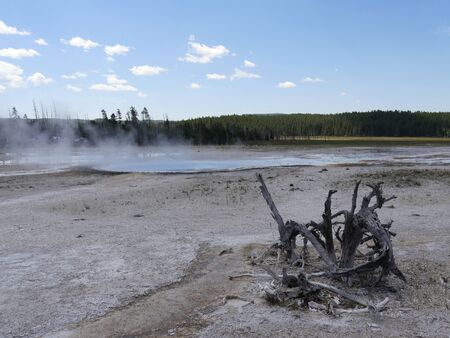 Wide shot of the Lower Geyser Basin, with steam rising up from a geyser at Yellowstone National Park.