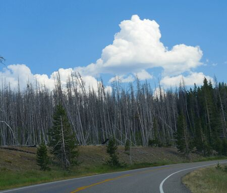 Beautiful clouds over the forest on a beautiful day, with young aspen trees in the forest