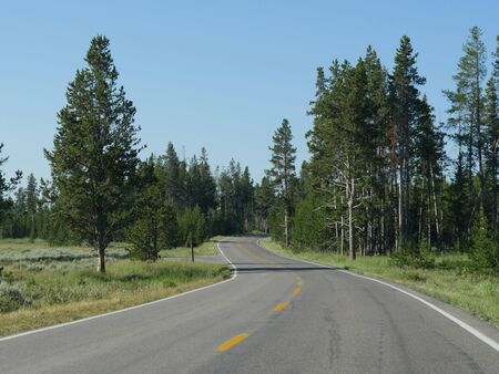 Paved winding road with tall trees at Yellowstone National Park, Wyoming.