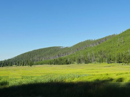 Pleasant greens at Hayden Valley at Yellowstone National Park, Wyoming