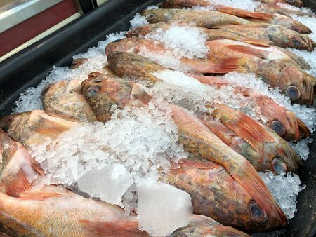 Red snapper fish with crushed ice at a seafood market Foto de archivo
