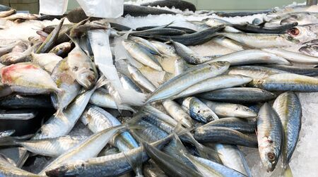 Haufen frischer Makrelenfische auf einem Meeresfrüchtemarkt