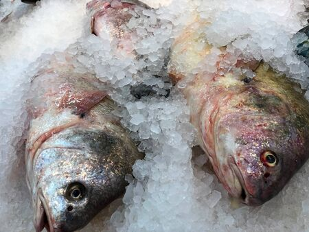 Close up of raw fish sold preserved with crushed ice at a seafood market