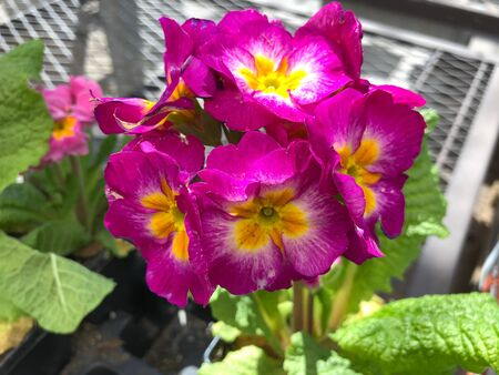 Bright pink flowers with yellow centers