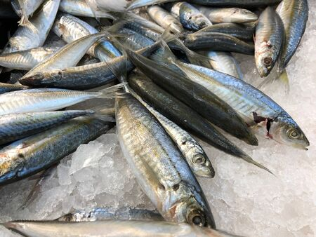 Close up of fresh mackerel fish in crushed ice at a seafood market