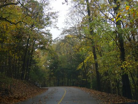 Scenic drive with the road showered with fallen colorful leaves in autumn