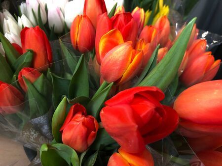Blouquets of red and white tulips wrapped in plastic Banco de Imagens