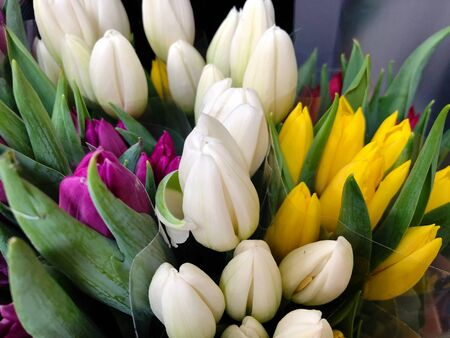 Medium close up of tulips of various colors in bouquets Banco de Imagens