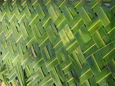 Close front shot of fresh coconut leaves woven into a mat