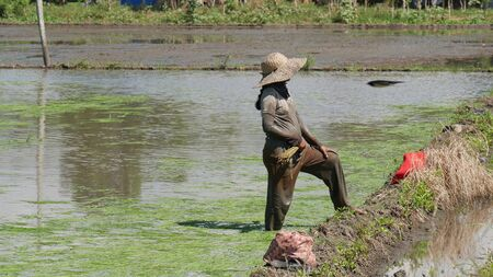An unrecognizable pregnant farm worker takes a brief rest by the rice paddies in the southern Philippines. 스톡 콘텐츠