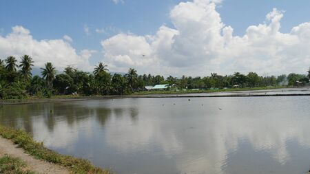 Irrigated rice paddies all ready for the next rice planting season in the southern Philippines.