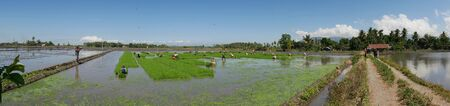 Banay Banay, Davao Oriental, Philippines - March 2016: Panoramic shot of vast ricefields with workers preparing for the next planting season in the Philippines. 에디토리얼