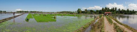 Banay Banay, Davao Oriental, Philippines - March 2016: Panoramic shot of vast ricefields being prepared for the next planting season in the Philippines. 에디토리얼
