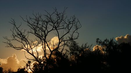 Close up shot of tree silhouette and beautiful clouds at sunset