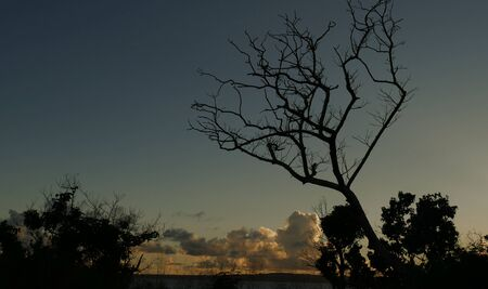 Cropped shot of tree silhouettes and beautiful clouds in the skies at sunset