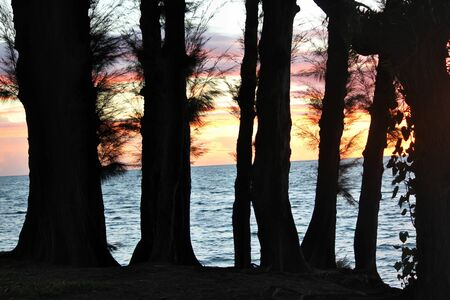 Snippet of sunset colors behind the silhouette of pine trees along the beach.