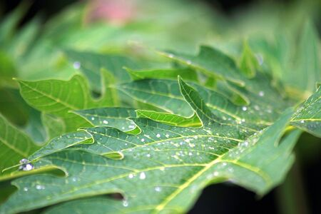 Side view of green leaves glistening with dewdrops