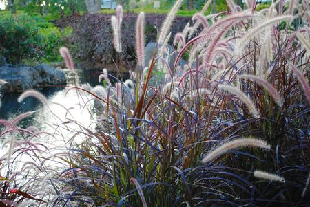 Thick patch of colorful grass flowers in a garden