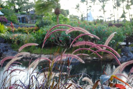 Thick patch of colorful grass flowers in a landscaped garden