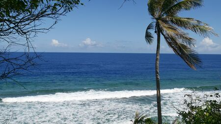Cropped shot of white foaming waves with a lone coconut tree at Parola Beach, Cape San Agustin, Davao Oriental. 写真素材