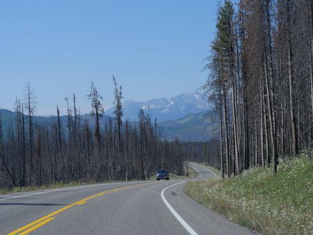 Wyoming, USA- July 2018: Wide view of the winding scenic road at Grand Teton National Park, flanked by trees leftover from previous forest fires.
