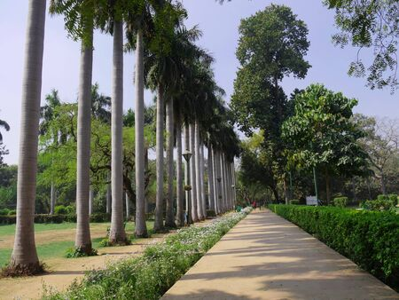 New Delhi, India- March 2018: Row of tall palm trees along a walkway at the Lodhi Gardens, one of the famous parks in New Delhi.