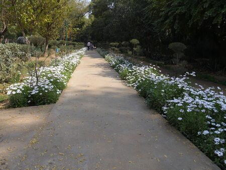 New Delhi, India- March 2018: Walkway bordered by smal white flowers at the Lodhi Gardens, one of the popular destinations in New Delhi.