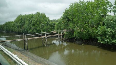 Wide shot, side view of a suspended bamboo bridge connects two sides of a ditch. Stockfoto