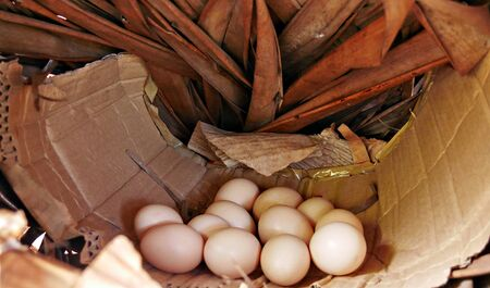 A dozen eggs laid by a free range chicken on a cardboard and woven coconut leaves